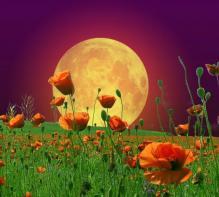 10 самых красивых, и самых опасных растений
