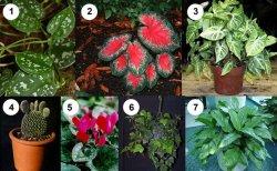 Домашние ядовитые цветы: ТОП-10