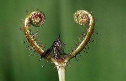 Самые удивительные хищные растения.